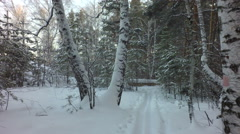 Ski track on snow in beautiful winter mixed forest Stock Footage