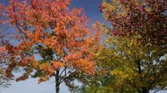 Camera tilts from autumn trees to fountain in Tiergarten Stock Footage