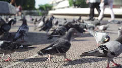 Pigeons look for bread crumbs at Dizengoff square fountain, close up, Tel-Aviv - stock footage