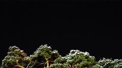 Stars cross the sky over winter forest.  Stock Footage
