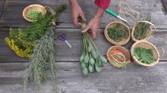 Gardener herbalist preparing to dry various medical herbs and spices Stock Footage