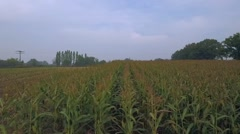 Aerial view of a large corn field Stock Footage