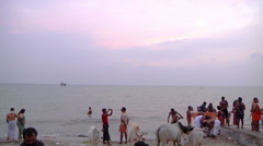 WS of people and cows on a beach in Rameswaram, India Stock Footage