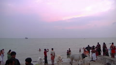 Tilt WS of people and cows on a beach in Rameswaram, India Stock Footage