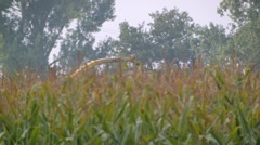 Harvesting the maize crop with an agricultural thresher Stock Footage