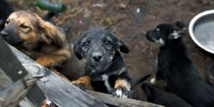 Puppy up for adoption Stock Photos
