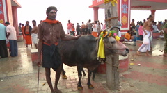 MS of a cow and people on a beach in Rameswaram, India Stock Footage