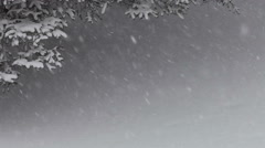Snowing under the spruce tree - stock footage