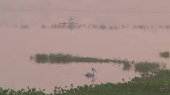 WS of a bird swimming in Mamallapuram, India Stock Footage