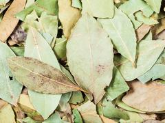 dried green aromatic bay leaves - stock photo