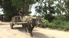 Man on cow car on dirty road Stock Footage