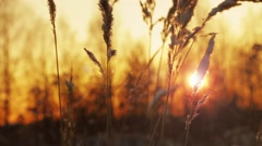 Frozen grass in field at sunset Stock Footage