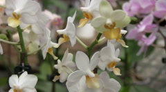 colorful orchids - stock footage