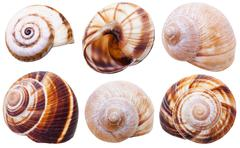Set of spiral mollusc shells of land snails Stock Photos