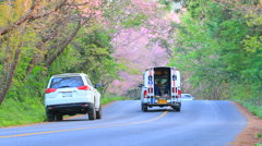 Road in angkhang destination flower blooming season in  chiangmai  thailand Stock Footage