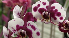 Colorful orchids Stock Footage