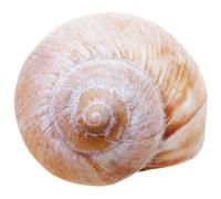 Stock Photo of spiral mollusc shell of gastropoda snail isolated