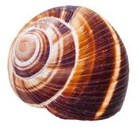 Empty spiral mollusc shell of land snail isolated Stock Photos