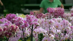 orchids in the nursery Unrecognizable people in background - stock footage