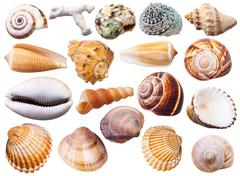 Set of various mollusc shells isolated on white Stock Photos