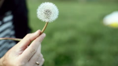 Man admires perfect dandelion seed head Stock Footage