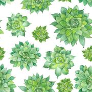 Watercolor Succulent Pattern on White Background - stock illustration