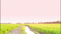 4K Time Lapse Beautiful Sunset On Rice Farm And Colorful Clouds Moving In Sky Stock Footage