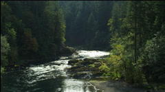 Evergreen forest along the banks of the North Umpqua River Canyon, Oregon Stock Footage
