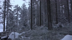 4k Beautiful winter forest panning Harz mountains Stock Footage