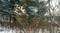 Snow covered shrub - stock footage