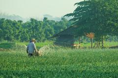 thai farmer working in agriculture plantation - stock photo