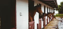 Horses in stable of equestrian centre Stock Photos