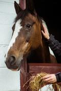 Horse in stable of equestrian centre Stock Photos