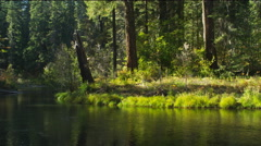 A stub of a broken tree on a grassy stream bank at the edge of a forest, Oregon Stock Footage