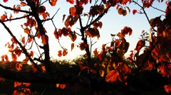 Sunrays coming trough tree leaves Stock Footage