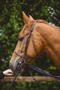 Side view of thorough breed horse Stock Photos