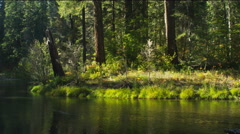 Right pan of a smoothly flowing creek through a forest, Oregon Stock Footage