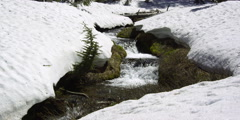 Mossy mountain stream rushing between overhanging snow on banks - stock footage