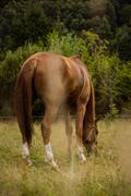 Rear view of thorough bred horse Stock Photos