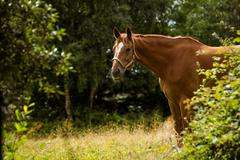 Side view of thorough bred horse Stock Photos
