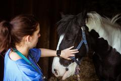 Vet examining horse in stable Stock Photos