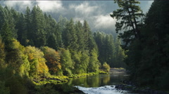 Mists blowing above tall evergreens along the North Umpqua River Canyon, Oregon - stock footage