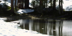 Small snowmelt pond surrounded by trees and snowbanks Stock Footage