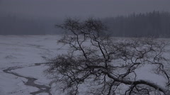 4k Gnarly tree winter forest Harz mountains Oderteich lake Stock Footage