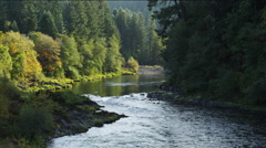 A river surrounded by sunlit trees Stock Footage