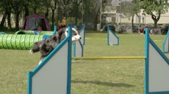 Furry black dog jumping on an obstacles - stock footage