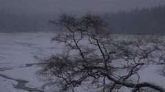 4k Gnarly tree winter forest Harz zoom Oderteich lake Stock Footage