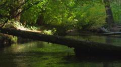 Tree across river Stock Footage