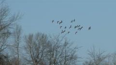 Ducks In Flight, Bird, Birds, Fly, Flying Stock Footage