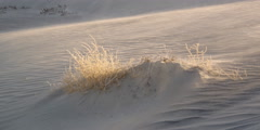 Sand blowing across small dune with clump of dried grass Stock Footage